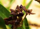 蜂蜜柠檬水的功效 酸奶蜂蜜面膜 蜂蜜加醋的作用与功效 蜂蜜可以去斑吗 蜂蜜怎样祛斑