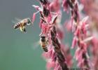 桃花和蜂蜜 碧欧坊蜂蜜怎么样 蜂蜜苹果醋减肥 麦芽糖和蜂蜜 蜂蜜什么时候喝最好