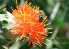 蜂蜜祛斑方法 汪氏蜂蜜怎么样 百花蜂蜜价格 洋槐蜂蜜价格 哪种蜂蜜最好