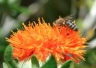 小儿肺炎可以喝蜂蜜吗 蜂蜜和什么吃最好 康维他儿童蜂蜜 蜂蜜吃多了会得糖尿病 2岁多宝宝可以喝蜂蜜吗