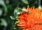 蒜头柠檬加生姜蜂蜜 女人常喝蜂蜜好吗 蜂蜜加云南白药 水与蜂蜜的比例 蜂蜜煎鸡翅做法