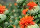 孕晚期喝蜂蜜水 白糖蜂蜜洗脸 痛风可以喝蜂蜜柚子茶吗 新加坡蜂蜜yummi爷爷吃过的蜂蜜 怎样腌柠檬蜂蜜