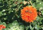三七泡蜂蜜水 洋葱蜂蜜醋 罗汉果姜蜂蜜能一起泡茶 蜂蜜凉拌苦瓜的做法 江汉路蜂蜜瓜子