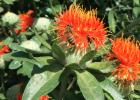 喝蜂蜜水会胖吗 蜂蜜去痘印 蜜蜂图片 哪种蜂蜜最好 蜂蜜水果茶