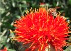 蜂蜜生姜茶 蛋清蜂蜜面膜的功效 养蜜蜂技术视频 蜜蜂养殖加盟 什么蜂蜜最好