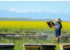 麦卢卡蜂蜜 蜜蜂养殖视频 养蜜蜂 冠生园蜂蜜 养蜜蜂的技巧