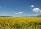 100克蜂蜜是多少 蜂蜜水开宫口 巩氏蜂蜜酒 有长期喝蜂蜜花粉的吗 如何鉴别蜂蜜结晶