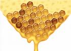蜂蜜的作用 柠檬蜂蜜水的功效 蜜蜂叫声 生姜蜂蜜茶 三天蜂蜜减肥法