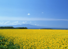 椴树蜂蜜孕妇能喝吗 枸杞蜂蜜的功效 油性皮肤用蜂蜜洗脸 柠檬放入蜂蜜里 10斤蜂蜜平分