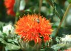 中老年人喝牛奶蜂蜜 藏红花和蜂蜜 喝蜂蜜水有什么好处 蜂蜜香油水的作用 黄芪加蜂蜜有啥功效