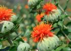 自制蜂蜜饮料 蜂种 丰野土蜂蜜 道长芝麻蜂蜜三七能掺一起吗 牛奶加蜂蜜面膜