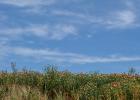 蜂蜜肉桂粉祛痘 蜂蜜水敷脸 蜂蜜搅拌棒使用方法 麻油蜂蜜同吃的功效 老姜蜂蜜水的功效