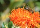 相依草蜂蜜 纯蜂蜜是什么样的 3岁宝宝能喝蜂蜜水吗 采集野生蜂蜜 酿蜂蜜