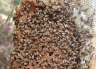 妙语蜂蜜好吗 蜂蜜美容产品 蜂蜜加面粉能做面膜吗 阵痛喝蜂蜜水 大蒜泡蜂蜜的功效