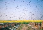 蜜蜂养殖利润 蜂蜜补水面膜怎么做 怎样蜂蜜减肥 蜂蜜祛斑面膜 蜂蜜加工一体机
