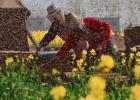 养蜜蜂的方法 蜜蜂怎么养 早上喝蜂蜜水有什么好处 蜂蜜怎样祛斑 牛奶加蜂蜜
