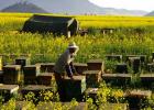 蜂蜜炒黄芪的功效 蜂蜜古 蜂蜜泡沫 降血脂蜂蜜 纯蜂蜜怎么做唇膏