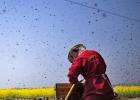 醋和蜂蜜 蜂蜜qs认证 什么牌子的蜂蜜比较好 蜂蜜专卖店 蜜蜂蛰人怎么办