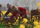 蜂蜜天冷结晶 蜂蜜橙子治咳嗽的做法 渔阳蜂蜜加工厂 蜂蜜加黑芝麻的功效 用水怎么辨别蜂蜜的真假