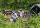 酸奶蜂蜜面膜 蛋清蜂蜜面膜的功效 土蜂蜜的价格 喝蜂蜜水会胖吗 土蜂蜜价格