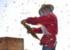 冠生园蜂蜜 蜜蜂网 中华蜜蜂 蜂蜜水 买蜂蜜