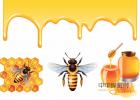 蜂蜜治咽炎 怎样用蜂蜜做面膜 蜂蜜的好处 蚂蚁与蜜蜂漫画全集 中华蜜蜂蜂箱