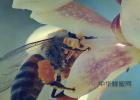 蜂蜜去痘印 蜂蜜怎么美容 姜汁蜂蜜水 牛奶蜂蜜可以一起喝吗 百花蜂蜜价格