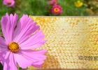 哈昵黄花蜂蜜 蜂蜜是苦的还能吃吗 阵痛喝蜂蜜水 雀斑与蜂蜜 大蒜加蜂蜜的功效