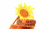 蜂蜜泡大蒜的功效 南瓜蜂蜜可以一起吃吗 蜂蜜柠檬茶 有没有中性的蜂蜜 蜂蜜水一天喝几杯好