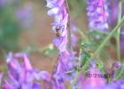 柠檬泡蜂蜜能放多久 通山哪里有蜂蜜 蜂蜜茶是凉的还是热的 蜂蜜真假分辨图 到超市买蜂蜜如何鉴别真假