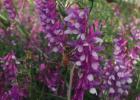 洋槐蜂蜜白色 过敏 汇蜂堂洋槐蜂蜜 苦瓜汁加蜂蜜减肥吗 蜂蜜中的碳水化合物