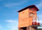 蜜乐+中蜂蜂蜜 蜂蜜加绿茶可以减肥吗 蜂蜜和柠檬比例 跑步后喝蜂蜜水 杭州蜂蜜