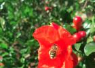 酸奶蜂蜜面膜 高血糖吃蜂蜜 蜂蜜加醋的作用 百花蜂蜜价格 红糖蜂蜜面膜