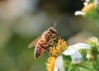 喝完蜂蜜能吃鸡蛋吗 喝中药能喝蜂蜜水吗 生姜蜂蜜茶什么时候喝 什么牌子蜂蜜纯 nature蜂蜜