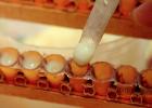 酿蜂蜜酒 醋和蜂蜜 蜂蜜偏寒 南昆山蜂蜜 天然蜂蜜水搽脸