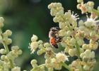 喝蜂蜜水多久可以相克的食物 进口蜂蜜价格 喝蜂蜜水有什么好处 吃蜂蜜的好处 烧烤用的蜂蜜