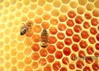 蒸木瓜蜂蜜 黑蜂蜜的疗效和吃法 西峰蜂蜜 蜂蜜水什么体质 云南蜂蜜批发