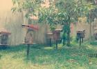 黑芝麻蜂蜜脱毛 蜂蜜皮炎 中华土蜂蜜 椴树蜂蜜真假 蜂蜜水早晨喝好吗