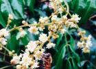 鹅蛋和蜂蜜 新疆蜂蜜 蜂蜜麻糖 鲫鱼吃蜂蜜吗 新加坡蜂蜜yummi爷爷吃过的蜂蜜