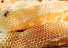 私密处蜂蜜 西瓜花蜂蜜 喝白酒喝蜂蜜 橙汁加蜂蜜 临产前蜂蜜