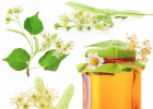 蜜蜂量产蜂蜜有多少 东北黑蜂蜂蜜价格 新西兰蜂蜜 1岁喝蜂蜜吗 蜂蜜巢