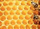 蜜蜂四季管理 老蜂蜜 蜜蜂蛰了 三七粉加蜂蜜 蜂蜜润唇膏