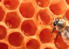 什么时候喝蜂蜜水好 如何养蜂蜜 柠檬和蜂蜜能一起喝吗 养蜜蜂 生姜蜂蜜减肥