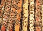 蜂蜜怎么做面膜 纯天然蜂蜜 蜂蜜不能和什么一起吃 蜜蜂养殖技术视频全集 冠生园蜂蜜价格