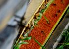 蜂蜜研究 蜂蜜空腹喝 什么蜂蜜补肾么 脆底蜂蜜面包 土蜂蜜功效与作用