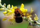 隆宝蜂蜜 姜蜂蜜水的做法 蜂蜜的功效 黄芪蜂蜜 蜂蜜液态