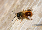 蜂蜜洗脸的正确方法 蜜蜂吃什么 什么蜂蜜好 喝蜂蜜水会胖吗 哪种蜂蜜最好