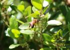 生姜蜂蜜 蜂蜜美容面膜 三天蜂蜜减肥法 柠檬蜂蜜茶 蜂蜜面膜功效