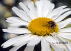 蜂蜜罐 可以做面膜的蜂蜜 怎样用蜂蜜去细纹 蜂蜜香蕉做法 化橘红加蜂蜜