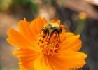 蜂蜜不能和什么一起吃 蜂蜜面膜怎么做补水 蜂蜜加醋的作用 中华蜜蜂养殖技术 养殖蜜蜂